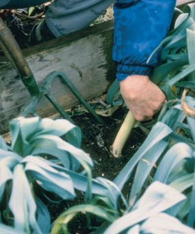 kg04-cold-frame-gardening-07_lg