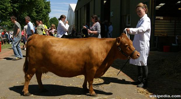 BIG-Milk-Animals