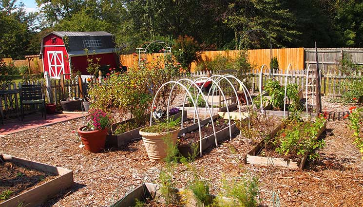 Vegetable Garden Planning For Beginners The Prepper Dome