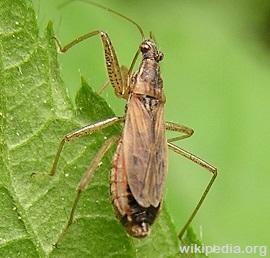 Damsel-Bugs1