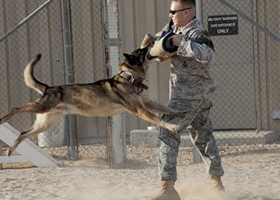MilitaryProtectionDogs