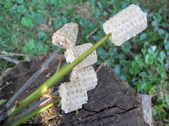 corn-cob-tips