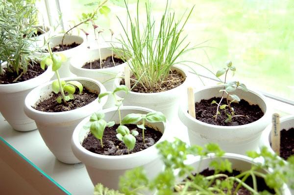 herb-indoor-garden-home