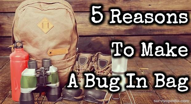BIG-Bug-in-Bag