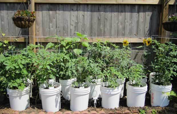 Top 5 five gallon bucket ideas the prepper dome for Gardening 5 gallon bucket