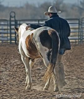 cowboy-419083