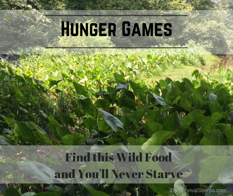 hunger-games-find-this-wild-food-and-youll-never-starve-thesurvivalsherpa-com