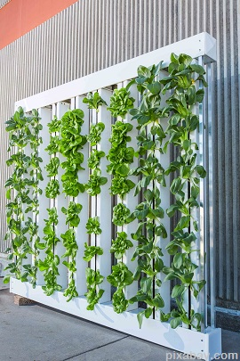 vertical-farm-916337