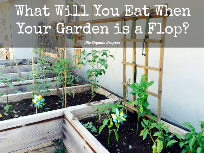 What-to-Eat-When-Your-Garden-is-a-Flop