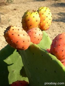cactus-412935