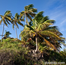 palm-trees-669328