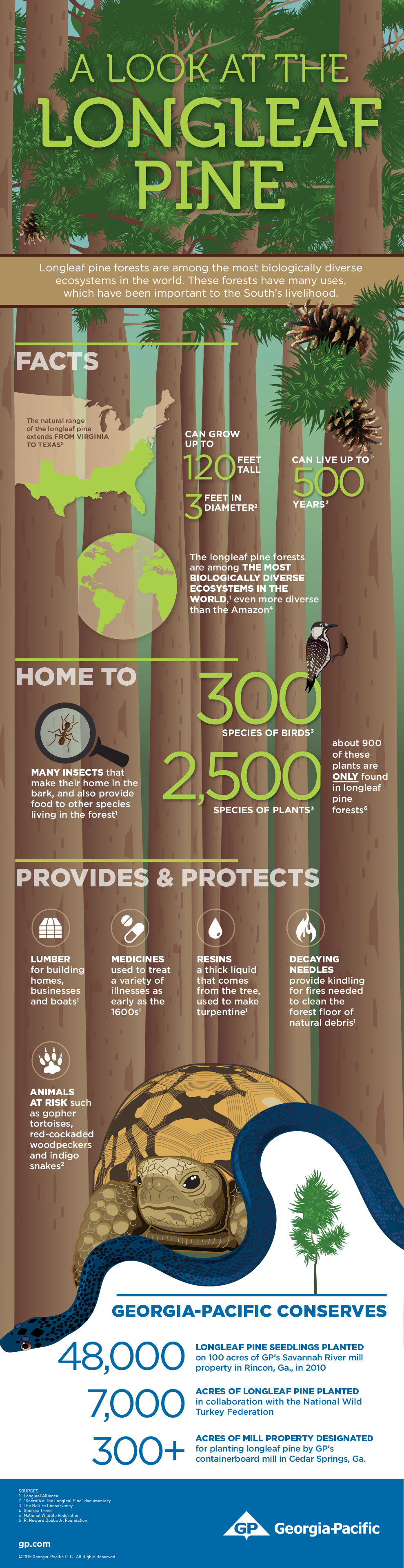 GP-Longleaf-Infographic