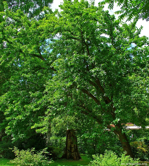 10 Trees That Any Prepper Should Grow The Prepper Dome