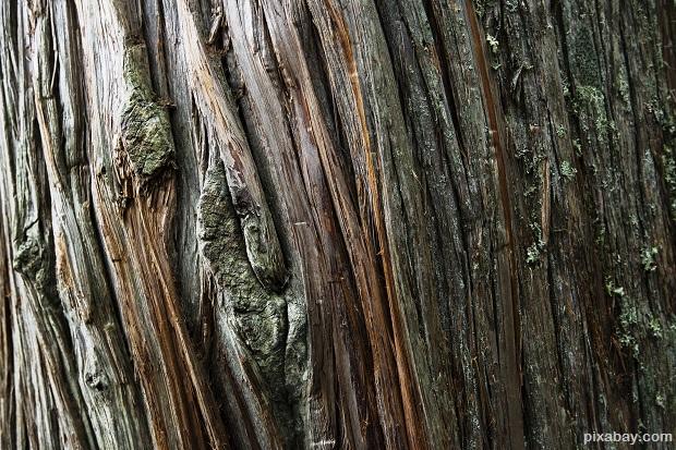 cedar-tree-1092076