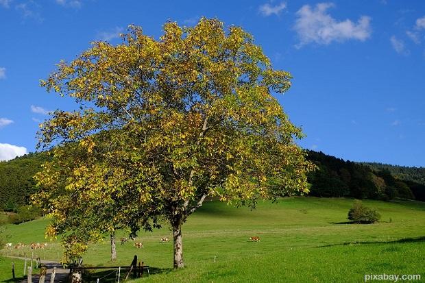 walnut-972018_1280