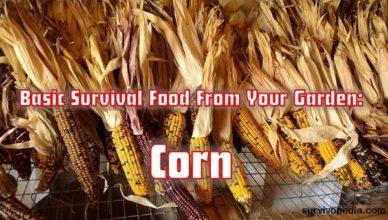 survivopedia-corn