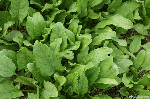 spinach-506616_1920
