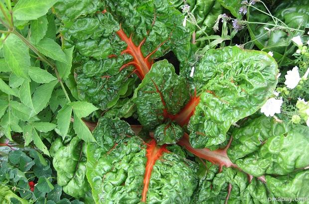 vegetables-1092517_1920