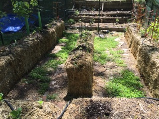 Hay And Straw Bale Gardening Everything You Wanted To Know For The Best Bounty Ever The